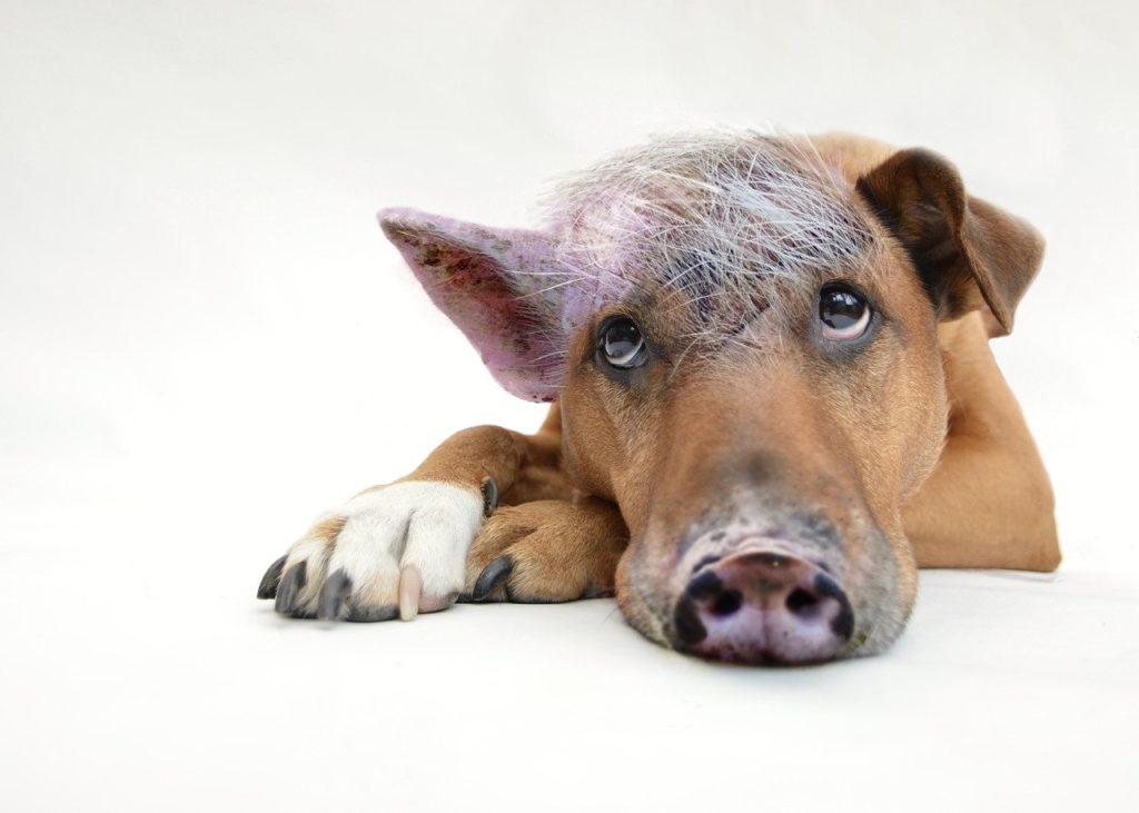 Schaffe dir eine sportliche Identität, dann ist der Schweinehund kein Problem mehr.