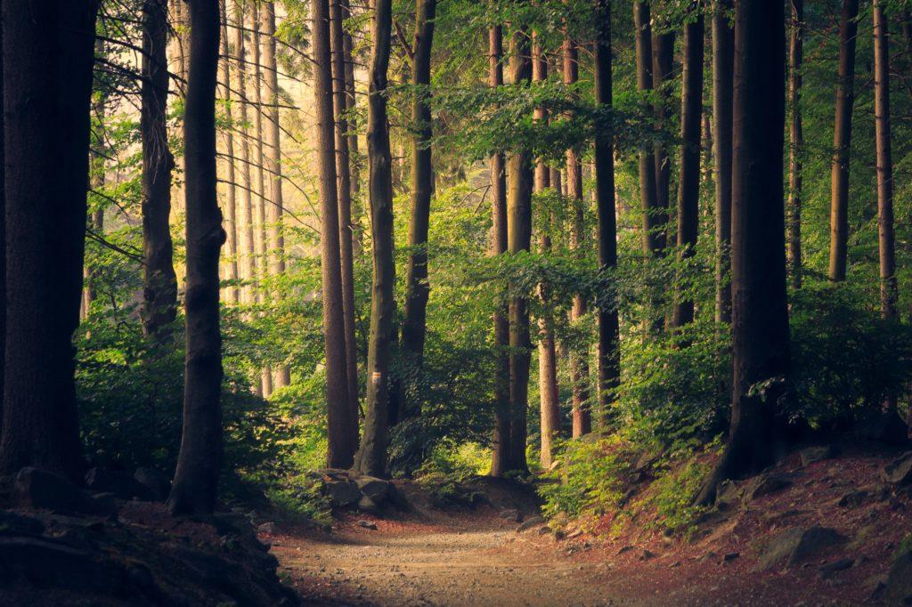 Waldbaden - Das Minimalismus-Projekt von Christof Herrmann