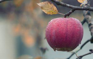 Minimalismus und gestörtes Essverhalten